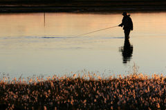Twilight fishing. A man flyfishing in calm weather in twilight, sun lighting up the water and the near riverbank Royalty Free Stock Photos