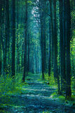 Twilight forest Stock Image
