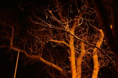 Twilight in the forest, scary trees, mystic dark grunge halloween background. Turkey Royalty Free Stock Photography