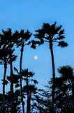 Twilight with the full moon and palm tree silhouette Royalty Free Stock Image