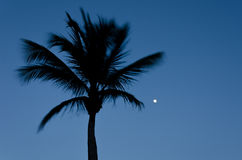 Twilight with the full moon and palm tree silhouette Stock Image