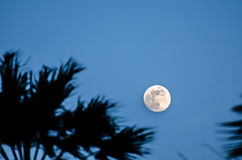 Twilight with the full moon and palm tree silhouette Royalty Free Stock Images