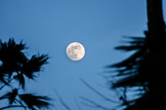 Twilight with the full moon and palm tree silhouette Royalty Free Stock Photos
