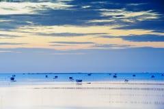 Twilight Himmel auf dem Strand Stockfotos