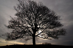 Twilight I. Picture of a tree on a winter day in London (Primrose Hill Royalty Free Stock Image