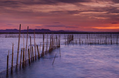 Twilight in La Albufera Royalty Free Stock Images