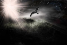 Free Twilight Landscape With Bird Stock Photos - 10268793