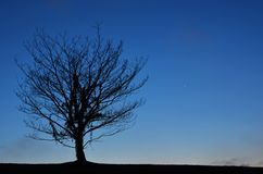 Twilight Lone Tree Stock Image