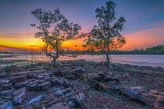 Twilight in the mangrove tree. Location sekupang sub-districts, batam city, indonesia country, moment sunset, high tide, background yellow sun stock images