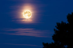 Twilight Moon. A huge moon behind a silhouette of a tree, at twilight stock photography