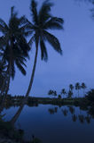 Twilight at the palm river Stock Photos