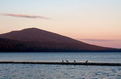 Twilight Pink Birds On Lake. Twilight pink colors and birds on a bar on Odell Lake in Oregon Stock Photo
