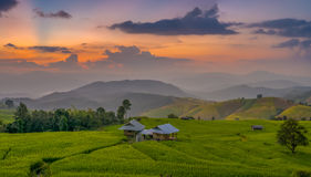 Twilight at rice terrace. Chiang Mai Thailand Royalty Free Stock Images