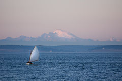 Twilight sailing in Puget Sound. Small sailboat glides through Puget Sound waters in front of Mount Baker at sundown Royalty Free Stock Photos