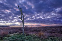Twilight scene at a tranquil heath-land, Goirle, Netherlands. Twilight scene with a purple colored sky at a tranquil heath-land, Goirle, The Netherlands Royalty Free Stock Images
