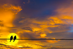 Twilight sky and silhouette of twin birds. Stock Images