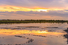 Twilight time on preparing land for planting at rice field Royalty Free Stock Images