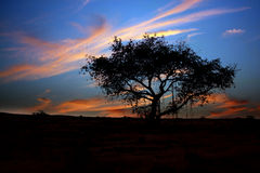 Twilight Tree Royalty Free Stock Photography