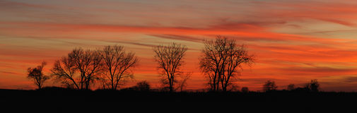 Twilight tree line (Panoramic) Stock Photography