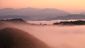 Twilight view of morning fog in rain forest Royalty Free Stock Images