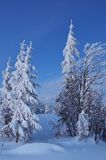 Twilight in the winter forest Stock Photo