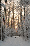 Twilight in winter wood Royalty Free Stock Photography