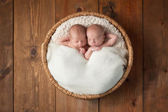 Twin Baby Boys Sleeping in a Basket. Four week old fraternal, twin baby boy sleeping in a round wicker basket. One of the boys has a subtle smile on his face royalty free stock photography