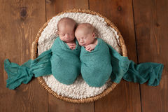 Twin Baby Boys Sleeping in a Basket. Four week old fraternal, twin baby boys swaddled in turquoise blue wraps and sleeping in a wicker basket. Shot in the studio royalty free stock photography