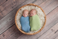 Twin Baby Boys Telling Secrets Royalty Free Stock Photography