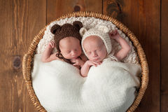 Twin Baby Boys Wearing Bear Bonnets. Three week old fraternal, twin baby boys wearing bear bonnets and sleeping in a wicker basket. Shot in the studio on a wood stock image