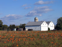 Twin Barns. A Pair of Barns Standing Out in a Pumpkin Patch Royalty Free Stock Photography
