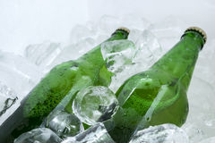 Twin beer bottle in the ice on white Stock Images