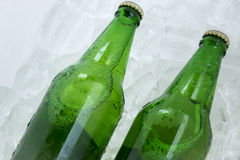 Twin beer bottle in the ice on white Stock Photos