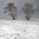 Twin birch tree in the snow stock photography