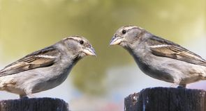 Twin birds Royalty Free Stock Photos