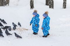 Twin boys walking in the Park in the winter and feed the pigeons bread crumbs stock images