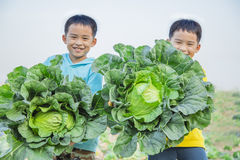 Twin brother with green cabbage Stock Images