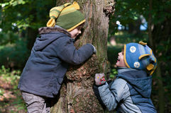 Twin brothers hug a tree. Four year old twin brothers climb a tree Royalty Free Stock Image