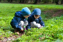 Twin brothers in the meadow Royalty Free Stock Photography