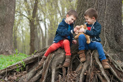 Twin brothers play in the forest. Four year old identical twin brothers sitting on the roots of a large tree play with the toy puppies. Season - spring Royalty Free Stock Photo