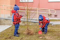 Twin brothers thrown tree Stock Photography