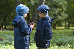 Twin brothers in the woods. Four year old identical twin boys in the forest. Theyre looking at the pinecone in hands. They are dressed in anoraks and hats Royalty Free Stock Images