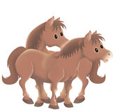 Twin brown horses. In an isolated illustration Stock Image