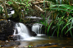 Twin Cascades. In the Gold Coast Hinterland, Queensland, Australia Stock Images