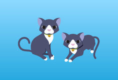 Twin cat. And blue background Stock Photography