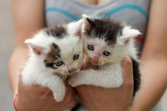 Twin cats Stock Photos