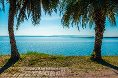 Twin coconut tree beside walkpath at lake. Stock Images