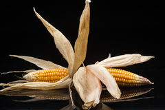 Twin corn of the cobs, still life, studio shot,  black backgroun Stock Photos