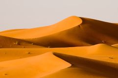 Twin dunes. Two sand dunes of the arabian desert in sunset glow stock images
