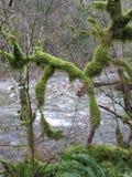 Twin Falls slinga, Olallie delstatspark, Washington Arkivbilder